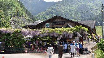 兵庫県朝来市「白井大町藤公園 藤まつり」へ散策ぶらり旅