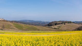 冬に咲く早咲きの菜の花20万本が咲くあわじ花さじきを見に散策ぶらり旅